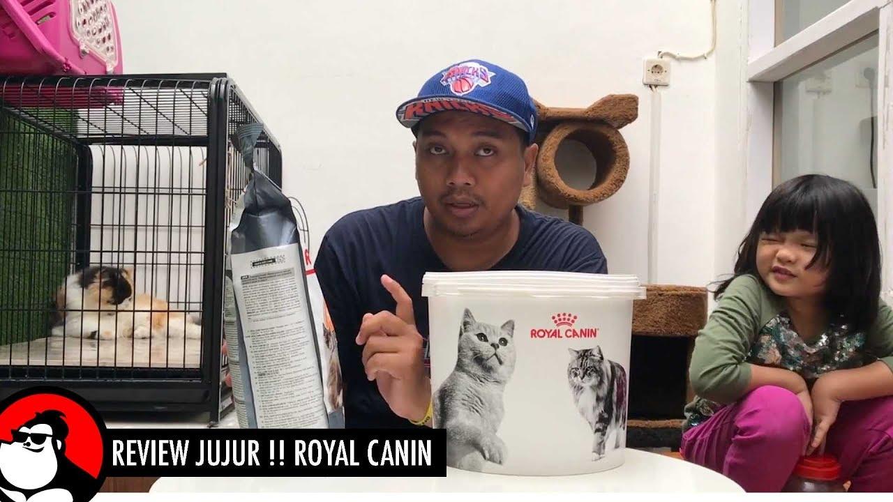 Royal Canin Review Jujur Makanan Kucing Youtube