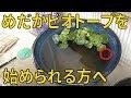 【アクアリウムめだか】小学生でも作れる簡単ビオトープの作り方