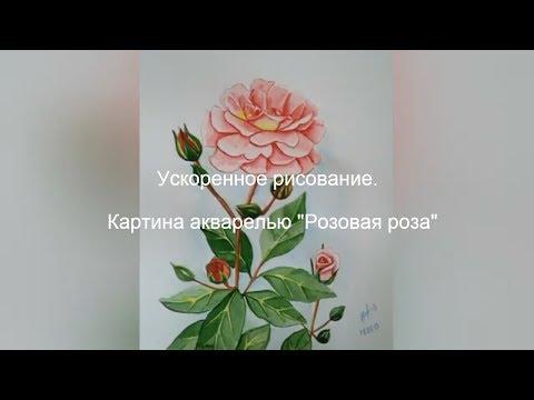 """Ускоренное рисование. Картина акварелью """"Розовая роза"""""""