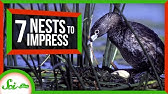 7 Nests That Will Change How You Think of Birds