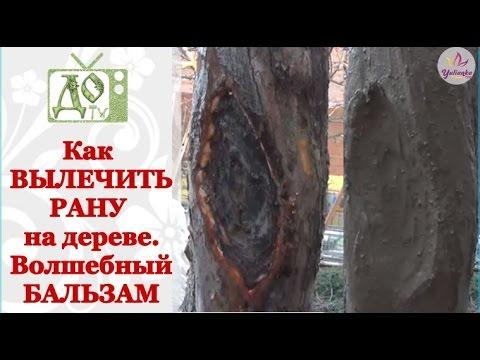 Вопрос: Стволы деревьев лучше белить или обмазать глиной?