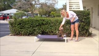My Favorite Of The Dog Training Commands - Teach Your Dog To Go Away With  The Place Command