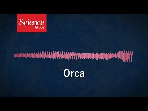 Snippet: Listen to an orca imitate a person