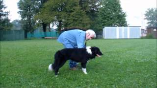 Video Graeme Sims   Addestramento di un Border collie da lavoro download MP3, 3GP, MP4, WEBM, AVI, FLV Mei 2018