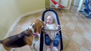 Dog Falling In Love With The Baby