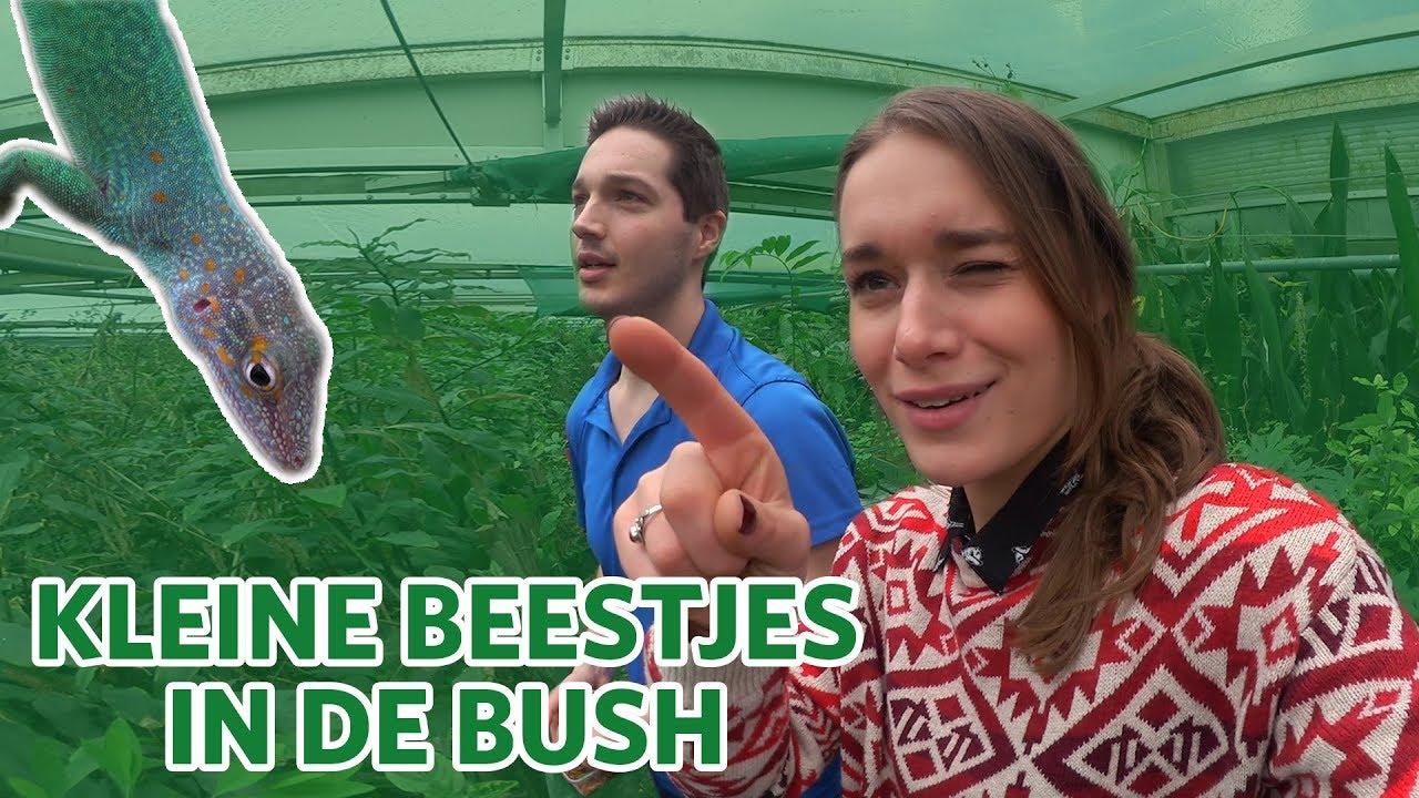 Op zoek naar de kleine beestjes in de Bush! 🦎