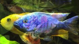 аквариумные рыбки 2