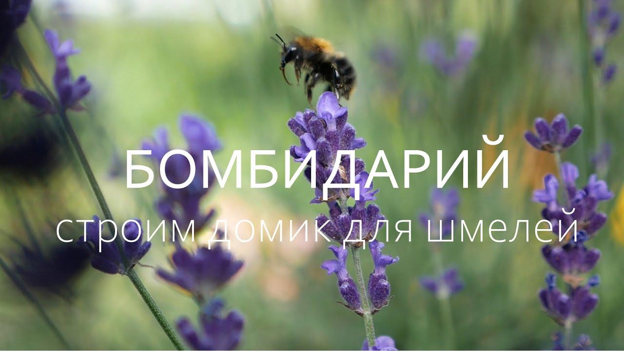 Строим шмельник и пересаживаем в него семью шмелей / Bumblebee / Bombus / Деревообработка