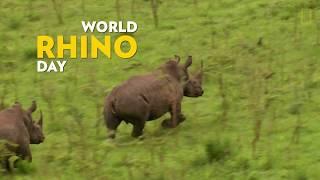 National Geographic World Rhino Day