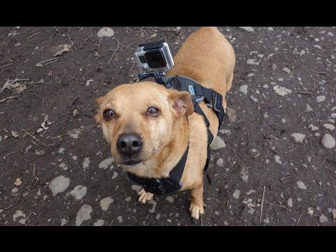 Happy GoPro Dog - [Living In Alaska 142]