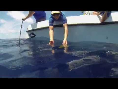 Rescue, Rehab & Release of 17 Sea Turtle Hatchlings