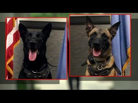 Meet the Hero K-9s That Protect the President