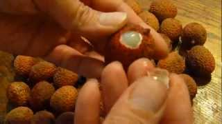 How to eat a lychee fruit