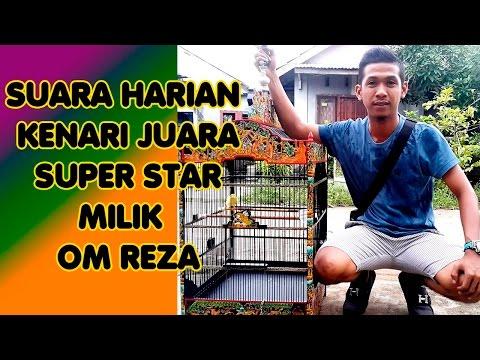 Download Lagu Suara Harian Burung Kenari Juara Super Star Milik Om Reza