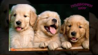 ЩЕНКИ! Раннее развитие детей.  Фото красивых щенков для детей
