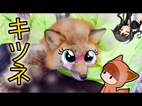 MOE KAWAII FOX ヾ (゚Д゚ ) - Japan Vlog One (vl)
