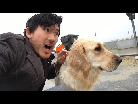 A Day With Chica - Part 6 - CHICA LOVES THE BEACH - A Day With Chica - Part 6 - CHICA LOVES THE BEACH