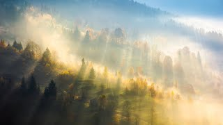Morning Relaxing Music - Piano Music for Stress Relief, Sleep Music, Study Music (Donald)
