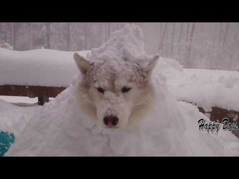 happy dogs in snow