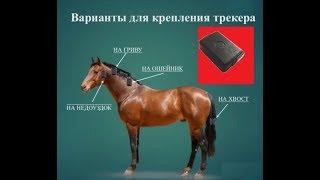 Gps трекер для лошади Adm50 (собак, КРС, коней, коров)