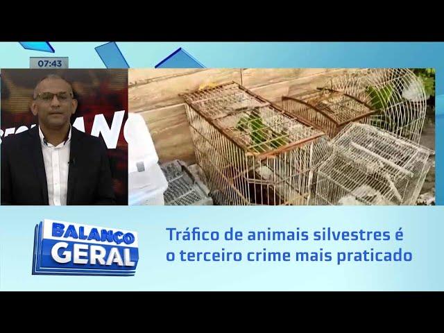 Segurança: Tráfico de animais silvestres é o terceiro crime mais praticado no mundo