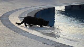 Турция отель Seher resort & spa 5 - Описания и отзыв(, 2013-02-06T12:51:46.000Z)