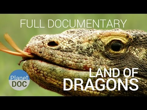 Full Documentary. Komodo Dragon | Land of Dragons  - Planet Doc Full Documentaries