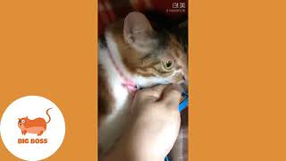 Cute Dogs and Cats   Funny Cats and Dogs