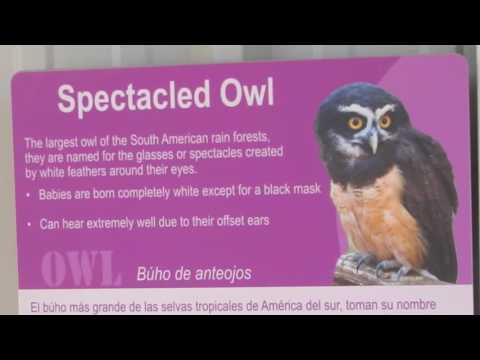 Santa Ana Zoo: Owls