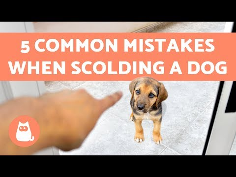 5 Common Mistakes When Scolding a Dog