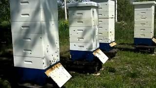 Обзор пасеки и мелкие вопросы пчеловодства