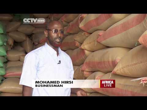 Somalia's Huge Potential in Sesame Farming