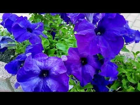 Чайковский - Вальс цветов.