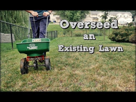 how-to-overseed-an-existing-lawn---fall-lawn-renovation-and-overseeding-step-4