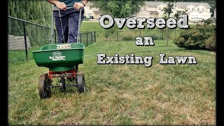 How To Overseed An Existing Lawn - Fall Lawn Renovation and Overseeding Step 4