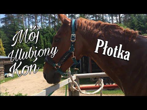 Mój Ulubiony Koń - Płotka