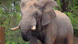 Walking Safari in Africa - intense close encounters with wildlife