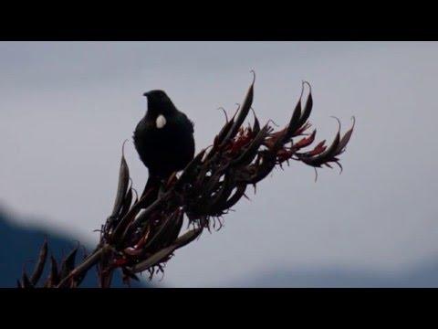 Relaxing 2 Hours + Of Beautiful Birdsong Of New Zealand