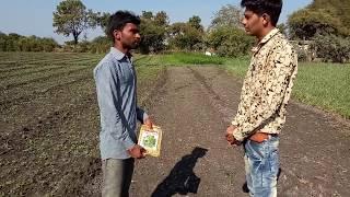 भिंडी की खेती-बुआई एवं खेत की तैयारी Bhindi cultivation