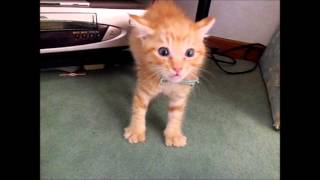 愛くるしさMAX! 大人の猫を初めて見た子猫の反応