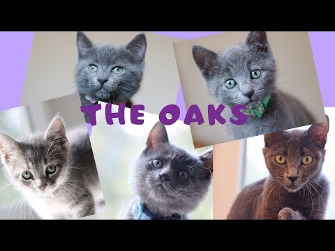 New Foster Kittens - The Oaks