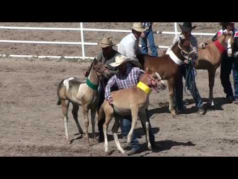 Baby Horses Abused at 2010 Cheyenne Rodeo