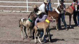 Video Baby Horses Abused at 2010 Cheyenne Rodeo download MP3, 3GP, MP4, WEBM, AVI, FLV Juli 2018