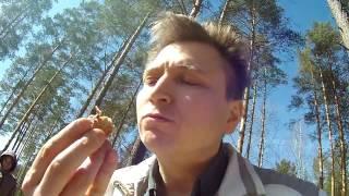 Рецепт шашлыка из карбонада