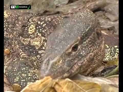 FORBIDDEN ANIMALS IN NIGERIA | TVC NIGERIA