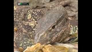 Gambar cover FORBIDDEN ANIMALS IN NIGERIA | TVC NIGERIA