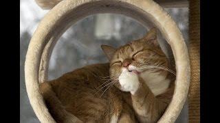 Домик для кота своими руками. Часть 1