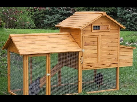 Top 10 Chicken Coops