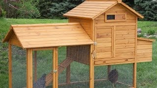 Top 10 Chicken Coops | Hayneedle.com