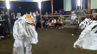 suko siswo spesial tahun baru 2017 kewan kewan part 1 rampak macan